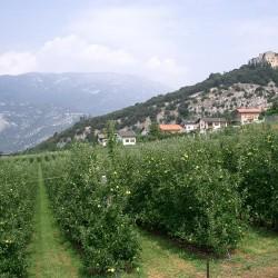 Castle Overlooking Lake Garda for Sale image 17