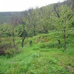 Copy of giardino