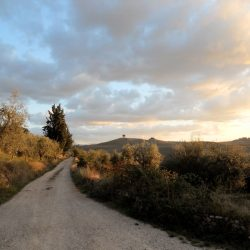 Val D'Orcia Estate with Organic Farm and Apartments (28)