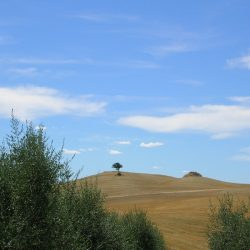 Val D'Orcia Estate with Organic Farm and Apartments (36)