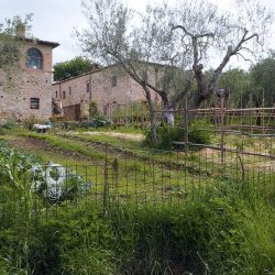 Val D'Orcia Estate with Organic Farm and Apartments (62)