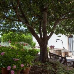 Trevi Property Image 45