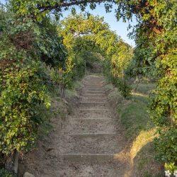 V4024TS Cortona Farmhouse Tuscany (28)-1200