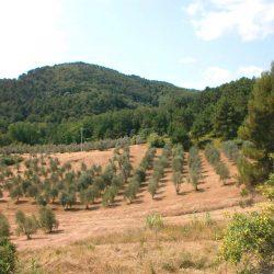 Chianni Farmhouse Image 15