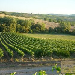 Winery and Agriturismo near Castellina in Chianti 2