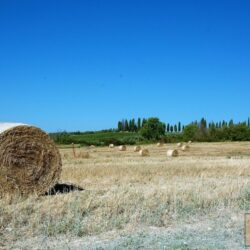 Winery and Agriturismo near Castellina in Chianti 35