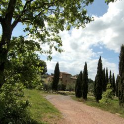Farmhouse near Pisa with Wine Production for Sale (2)-1200