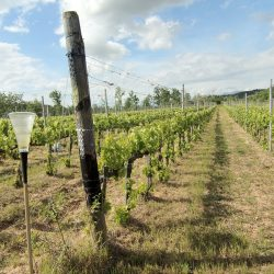 Farmhouse near Pisa with Wine Production for Sale (6)-1200