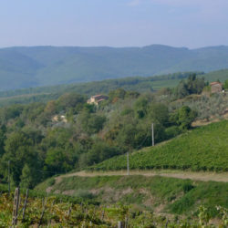Chianti Farmhouse with Pool and 2 Hectares 50