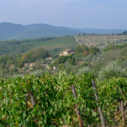 Chianti Farmhouse with Pool and 2 Hectares 49