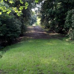 Estate with 45 Hectares for Sale image 12