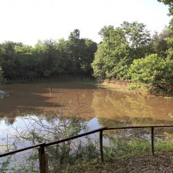 Estate with 45 Hectares for Sale image 6