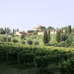 Estate with 45 Hectares for Sale image 5