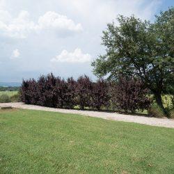 Umbrian Property Image 33