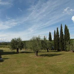 V5049HT Farmhouse near Pisa with Wine Production for sale - 1200 (13)