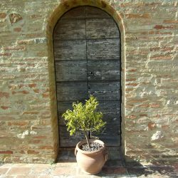 V5049HT Farmhouse near Pisa with Wine Production for sale - 1200 (16)