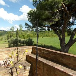 V5049HT Farmhouse near Pisa with Wine Production for sale - 1200 (32)