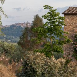 V5063AB Superb Farmhouse for sale near Montepulciano (12)-1200