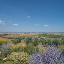 Val D'Orcia Property for Sale (25)
