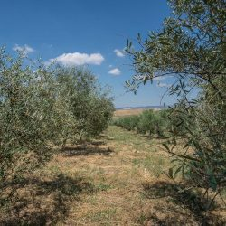 Val D'Orcia Property for Sale (44)