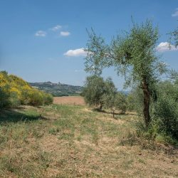 Val D'Orcia Property for Sale (45)