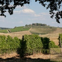 Winery and Agriturismo near Castellina in Chianti 32