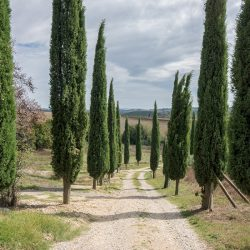 Val d'Orcia Apartments for Sale image 27
