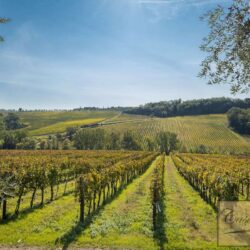 V5274AB winery for sale in Chianti Tuscany 4