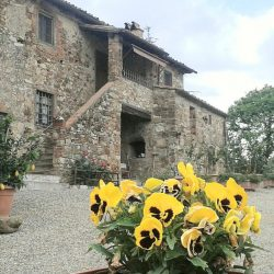Chianti Farmhouse with Outbuildings and 750 Olives (15)-1200