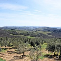 Chianti Farmhouse with Outbuildings and 750 Olives (16)-1200