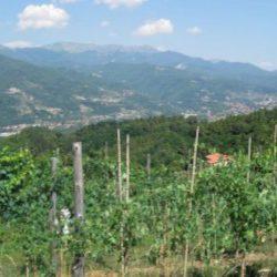 Tuscan Eco Apartments Image