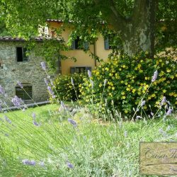 Restored Mill (8)