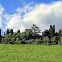 Chianti Estate for Sale near Florence image 32