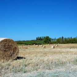 Winery and Agriturismo near Castellina in Chianti 27