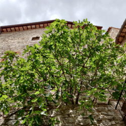 Delightful Umbrian Village House with 3 Terraces for sale (26)