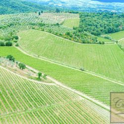 Winery with Borgo of 8 Apartments 39