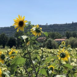 House near Ficulle Umbria with Pool for Long Term Rental (11)-1200