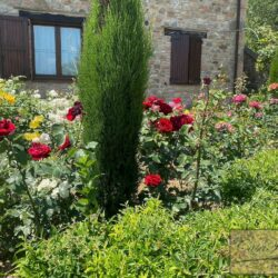 Stone House with Pool for sale near Piegaro 14