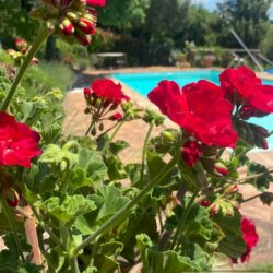 Stone House with Pool for sale near Piegaro 6